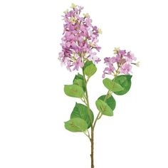 Linea Lilac single stem (23 MYR) ❤ liked on Polyvore featuring home, home decor, floral decor, flowers, plants, clearance, linea, flower stem and flower home decor