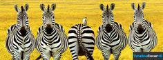 Five Zebras Timeline Cover 850x315 Facebook Covers - Timeline Cover HD
