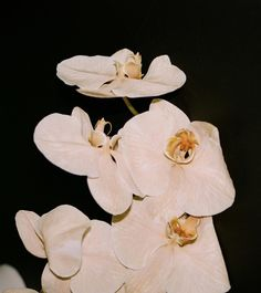 A floral arrangement. Ikebana Arrangements, Floral Arrangements, Planting Flowers, Beautiful Flowers, White Flowers, Instagram Posts, Pictures, Photos, Family Affair