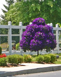 1000 images about petunia trees on pinterest tree stands petunias and trees - Fabulous flower stand ideas to display your plants look more beautiful ...