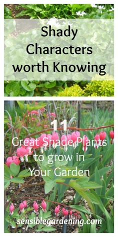 11 Great Shade Plants for your Garden with Sensible Gardening