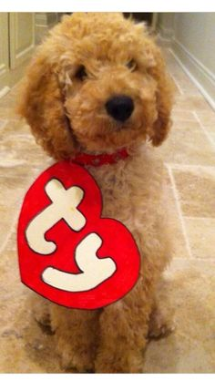 genius costume for a dog❤️