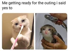 Funny cat memes so hilarious can't stop laughing. Super relatable cute memes that will make you love your furbaby even more. Cartoon Meme, Stupid Funny Memes, Funny Relatable Memes, Haha Funny, Funny Cute, True Memes, Funny Stuff, Funny Gifs, Funny Things