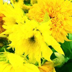 2014-07-16  ヒマワリ  梅雨明け目前の関東地方(*^^*)  ビタミンカラーが元気を運んでくれます♪