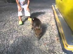 Video: Just a baby monkey riding backwards on a pig. You know, your usual everyday stuff.