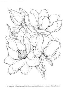 Gallery.ru / Фото #2 - Great Flower Prints - lenadep