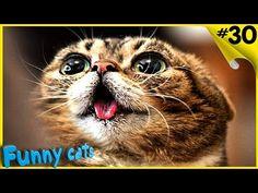 Приколы с котами и кошками 2016 Смешные коты и кошки смешные