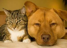 #cats #dogs