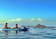 Be careful when using Kayak boats on the sea because it could be wild animals are trying to prey on you. Fellow victims who also go fishing while clim...