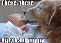 """New """"bald puppy"""" in the house.... #dog #funny #babies"""