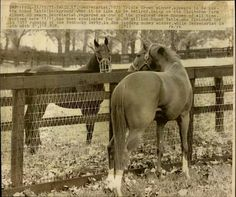 Secretariat and his father Bold Ruler