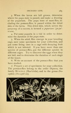 Insect life; - Biodiversity Heritage Library
