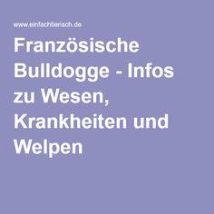 Französische Bulldogge - Infos zu Wesen, Krankheiten und Welpen