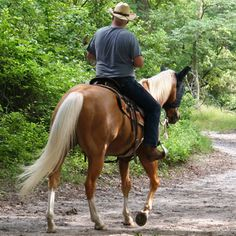 Channel Dad's inner cowboy with a day of horseback riding. #Dad #FathersDay