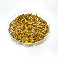 Insect Farming Is Taking Shape as Demand for Animal Feed Rises  As the world grows hungrier for animal protein, insects could be the new way to feed livestock.