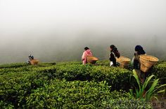Darjeeling | India