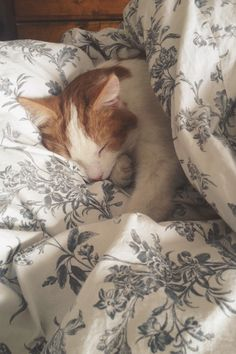 Farm Cat + Bedding + Winter Sun..snuggling in bed on a cold morning + Country + South
