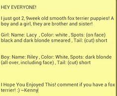 Got some fox terriers! ;)