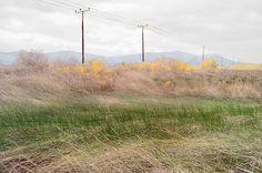 Photography, champ, paysage, câbles éléctriques, herbe