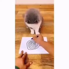 Funny Cute Cats, Cute Baby Cats, Cute Little Animals, Cute Funny Animals, Funny Dogs, Cute Babies, Funny Memes, Cute Animal Videos, Funny Animal Pictures