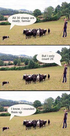 Herding sheep - The right way http://ift.tt/2sqHgNZ #lol #funny #rofl #memes #lmao #hilarious #cute