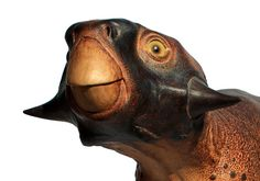Reconstruction of the dinosaur Psittacosaurus, by palaeoartist Robert Nicholls. Photograph: Robert Nicholls