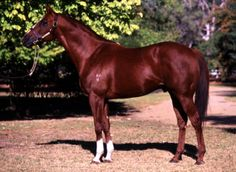 Kingston Rule (1986, Kentucky – December 2011) was an American-bred racehorse who raced in Australia, where he won the 1990 Melbourne Cup in a record time of 3:16:3. This time still stands as the record today. Bred and raced by Victoria's David H. Hains, who had bred Kingston Town, Kingston Rule was sired by the famed U.S. Triple Crown Champion, Secretariat, and out of the 1982 Australian Horse of the Year, Rose of Kingston. Kingston Rule was trained by Bart Cummings and ridden by Darren…