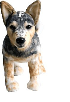 Cuddle Clones: Custom Stuffed Animals of Pets, Premium Quality Weenie Dogs, Doggies, Crazy Dog Lady, Cute Stuffed Animals, Baby Puppies, Dog Birthday, Happy Animals, Animal Crafts, Homemade Dog
