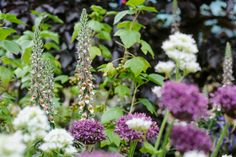 Discover six stunning ways to combine Digitalis (foxgloves) with other plants in the garden, with help from the experts at BBC Gardeners' World Magazine.