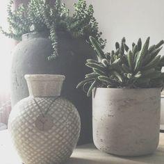 38 vind-ik-leuks, 1 reacties - Huisje Boompje; Feestje (@huisjeboompje_feestje) op Instagram: 'Even in huis kijken bij @lenetteengel! Leuke combi hoor!! 🌵🌱 #gewoonmooi #tuincentrummerkens…'