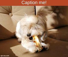 Help us caption this candid photo of Gypsy. #captionme #tailoredpetservices #petsitting #doglife #bestwoof #lovedogs #dogwalking #lovepets #doglovers #dogsitters #dogwalk #washingtondogs #happydog #spoiledpets #happydogsclub #dogstagram #petstagram #instapet #instapup #instawoof #instadog #activedogsofinstagram #dogsofig #dogsofinstagram #petstagram #pupstagram #cutenessoverload