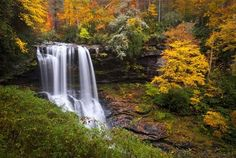 bossen - Bing Afbeeldingen