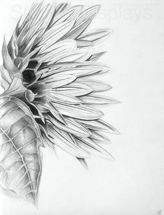 This listing is for an inch original pencil drawing of a giant sunflower. This drawing was inspired by my love for sunflowers, and meant to Pencil Drawings Of Flowers, Flower Sketches, Art Drawings, Drawing Flowers, Giant Sunflower, Graphite Art, Skyline Painting, Mixed Media Painting, Fine Art Paper