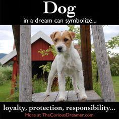 A dog in a dream can represent...   More at TheCuriousDreamer.   #DreamMeaning #DreamSymbol