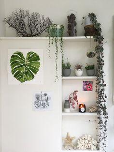 Urban Jungle Bloggers: Plantshelfie 2 by /Ceramicmagpie/
