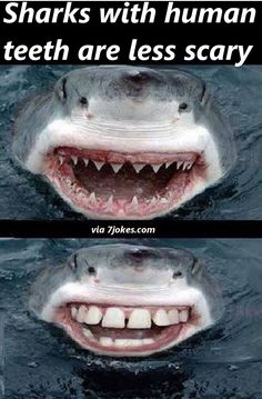 Sharks aren't scary with human teeth