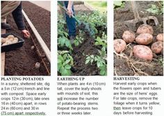 Growing Vegetables - Tips - Agriculture Planting Potatoes, Growing Vegetables, Compost, Agriculture, Harvest, Earth, This Or That Questions, Tips, Flowers