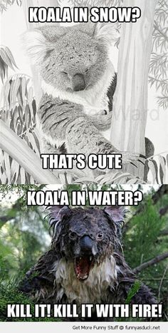 Not sure it's really a koala....it looks like a cross between something out of George Romero film and a Ridley Scott movie.