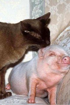 Pigggggyyyyy!!