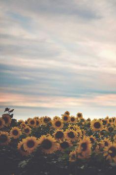 Sunflower field paradise