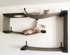 I just adore these cat shelves! They're like art for you and a jungle gym for your cats! :) Handmade Unique: Unique for You and Your Cat : Modern, Sculptural Cat Shelves by CatastrophiCreations – Grand Rapid, Michigan handmadeunique. Crazy Cat Lady, Crazy Cats, Cool Cats, Cat Wall Shelves, Floating Cat Shelves, Hanging Shelves, Cat Hammock, Cat Room, Pet Furniture
