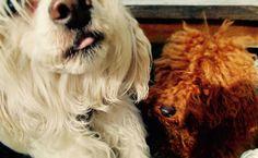 Sjonnie en Teddy