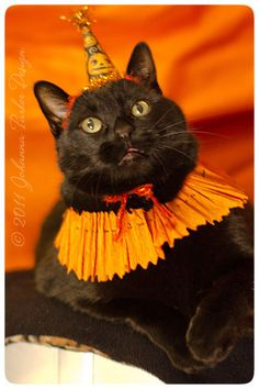 Halloween-Jack | Flickr - Photo Sharing!