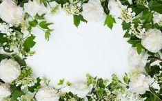 Download wallpapers white flowers, flower frame, chrysanthemum, floral background, white chrysanthemum