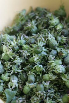 DILLIÄ JA PIPARJUURTA: toukokuu 2012 Raw Food Recipes, Vegetarian Recipes, Healthy Recipes, Healthy Food, Fodmap, Superfood, Preserves, Herbalism, Cabbage