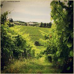 Aspettando la vendemmia. La #PicOfTheDay #turismoer di oggi passeggia tra le #vigne respirando l'aria della campagna faentina. Complimenti e grazie a @aledd78 / Waiting for the harvest. Today's #PicOfTheDay #turismoer strolls among the #vineyards breathing the air of #Faenza's countryside. Congrats and thanks to @aledd78