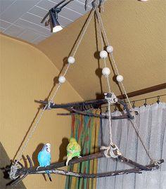 Budgie hanging scaffold – Pets and Supplies Cockatiel Toys, Parakeet Toys, Cockatiel Cage, Budgies, Parrots, Homemade Bird Toys, Diy Bird Toys, Bird Crafts, Parrot Perch Diy