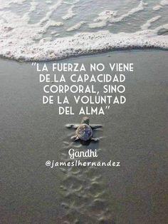 "James L. Hernández on Twitter: ""Ve por tus #sueños con mucha #fuerza, mucha…"