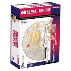 BOHS Human Body Skeleton Anatomy Skull Manikin Heart Anatomy Life Size Ear Model 4D Educational Puzzle Medical Science Doll Toys