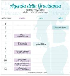 calendario visite ed esami in gravidanza, 1° trimestre - STAMPABILE